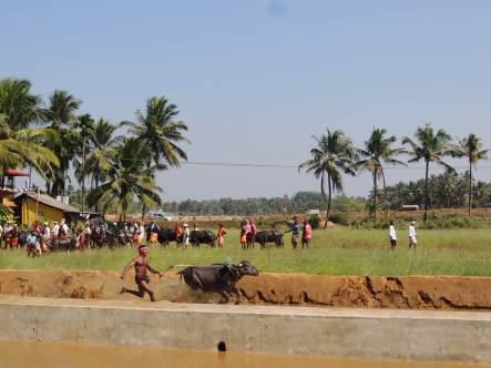 Bails racing Kambla